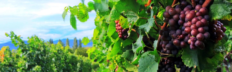 Weinbauregion Deutschland
