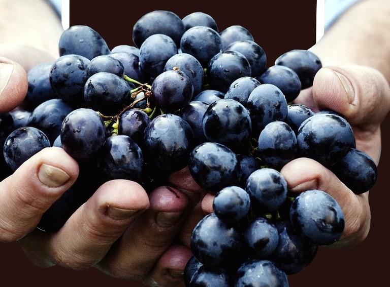 Ripasso Wein