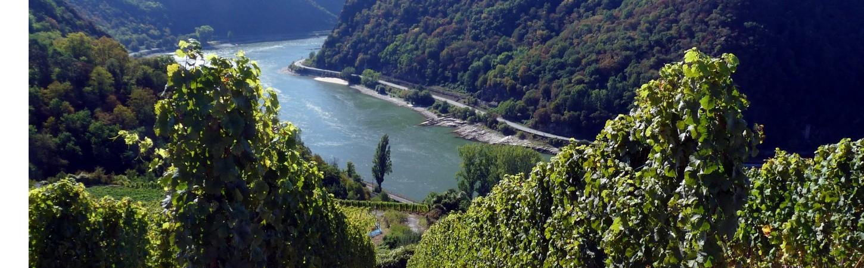Weine vom Rheingau